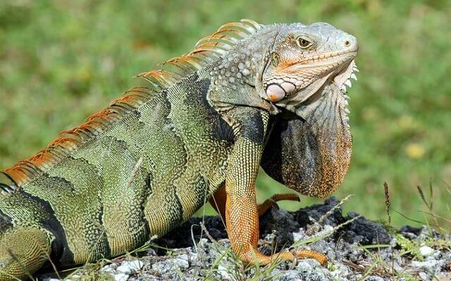 Fotos-de-Reptiles