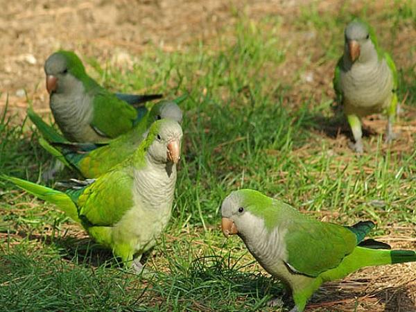 Quakers – Exotic Bird Hospital