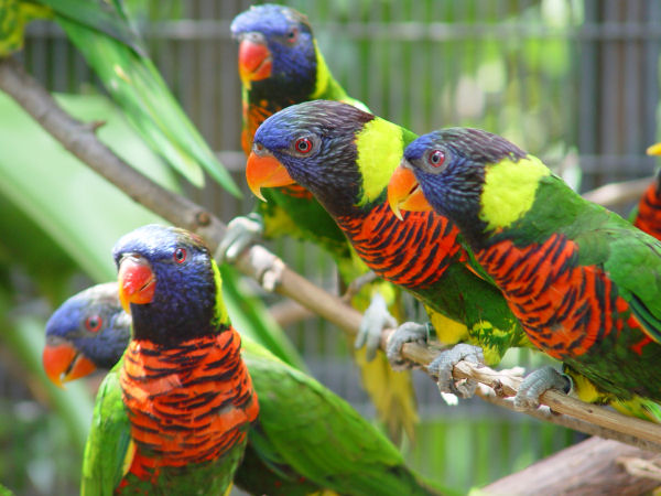 Lories – Exotic Bird Hospital