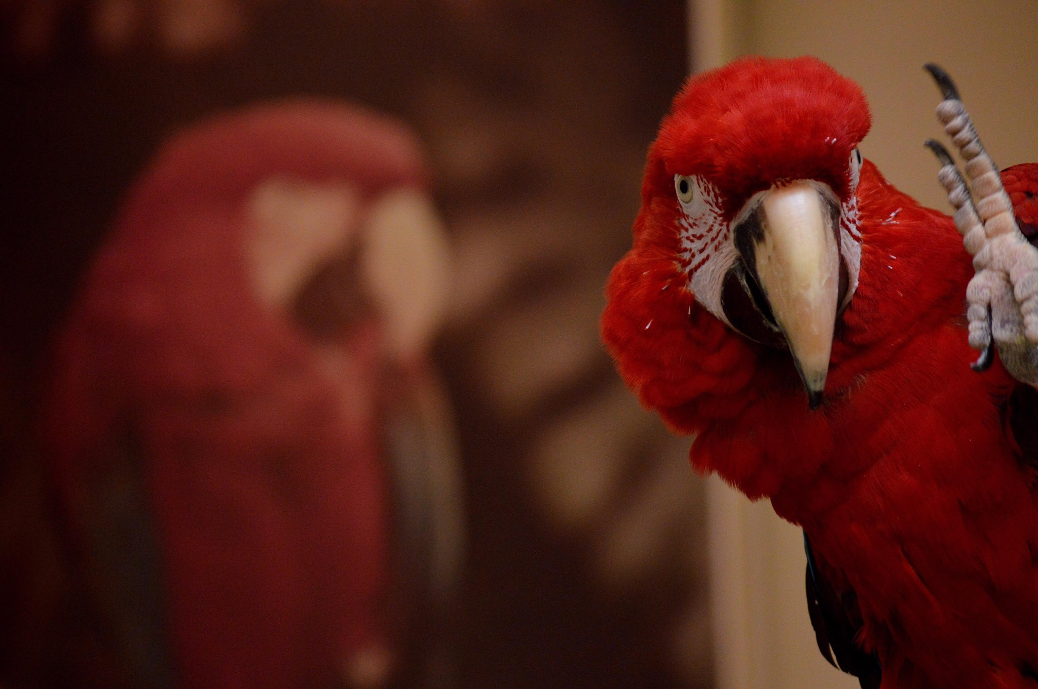 Exotic Bird Hospital – Dedicated to excellence in avian and